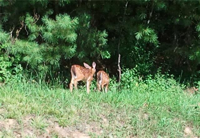 324 Oleta Mill Trail, Hendersonville, NC 28792 (#3358818) :: Zanthia Hastings Team