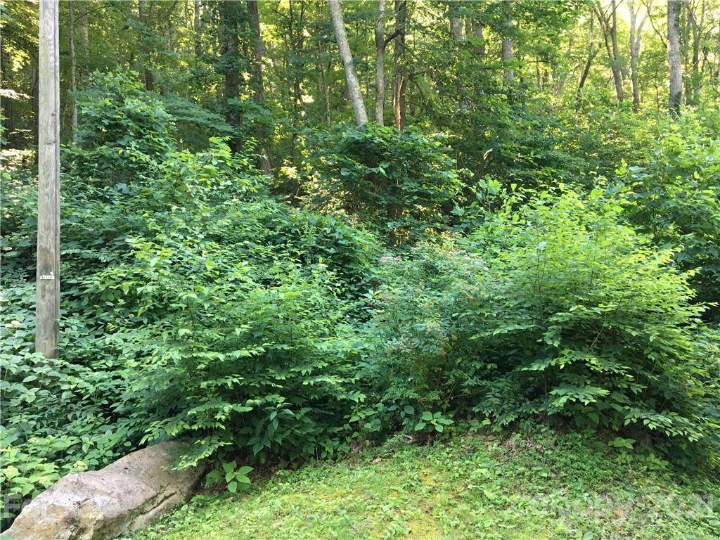 TBD Red Oak Forest Road - Photo 1