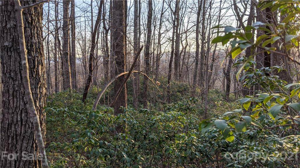 12.6 Acres on Forest Brook Drive - Photo 1