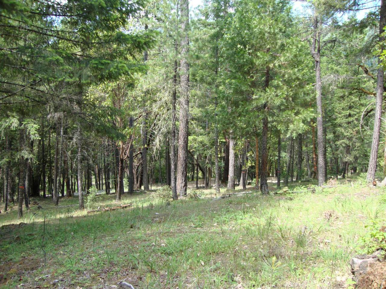 0 Ditch Creek Lot 205 Road - Photo 1
