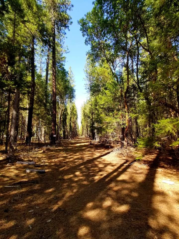 0 Pleasant Creek Rd Road - Photo 1
