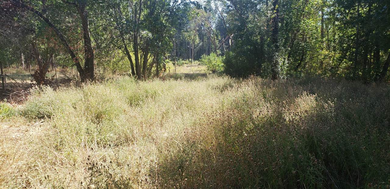 449 Caves Highway - Photo 1