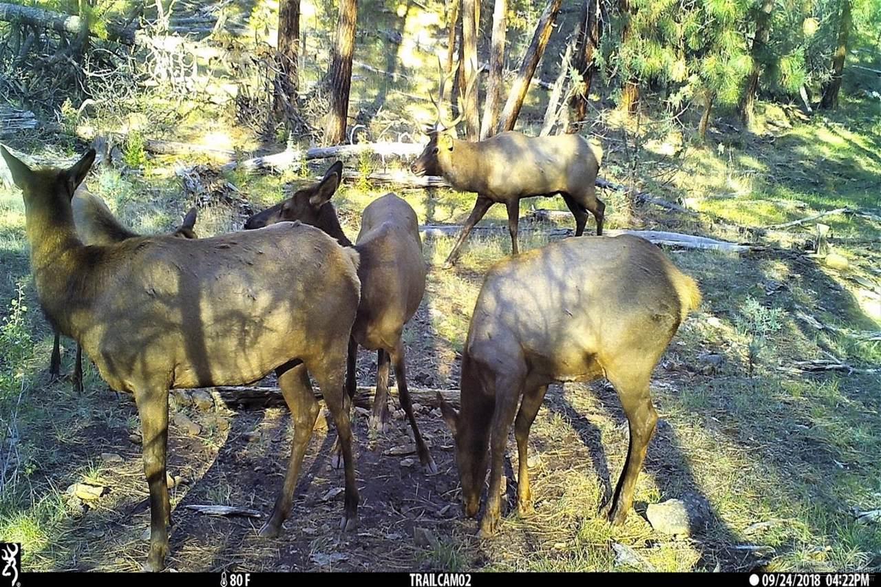 200 Wolf Creek - Photo 1