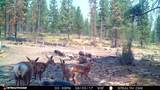 150 Skeen Ranch Rd - Off - Photo 29