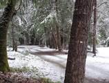 6776 Pleasant Creek Road - Photo 7