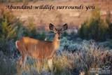 0 Sw Sundown Canyon Road - Photo 18