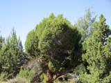 174 Highland Meadow Loop - Photo 9