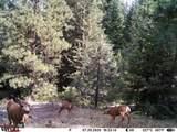 16981 Opal Mountain Ranch Road - Photo 28