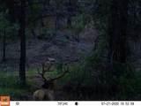 16981 Opal Mountain Ranch Road - Photo 32