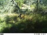 16981 Opal Mountain Ranch Road - Photo 33
