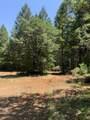 Limpy Creek Tl 203 Road - Photo 4