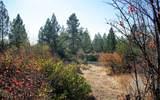 Pine Hollow - Photo 3