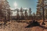 16867 Canyon Crest Drive - Photo 16