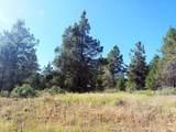 1135 Oregon Ash Circle - Photo 3