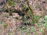 5627 Sardine Creek L Fork Road - Photo 23