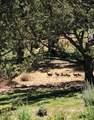 1330 Harrier Court - Photo 27