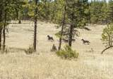 27850 Old Wolf Creek Road - Photo 41