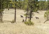27280 Old Wolf Creek Road - Photo 41