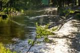 15104 River Loop Drive - Photo 4