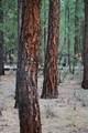 14691 White Pine Way - Photo 4