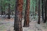 14691 White Pine Way - Photo 5