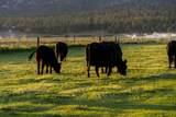 8521 Mountain View Acres Road - Photo 58