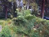 3635 Cahuilla Circle - Photo 66