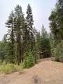 25728 Dog Creek Road - Photo 17