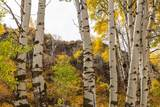 51197 Sphar Ranch Road - Photo 9