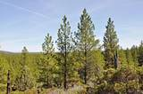 62755 Forest Service Road 4606 - Photo 2