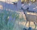 665 Rancho Lane - Photo 24