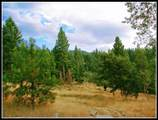 5981 Old Siskiyou Highway - Photo 5