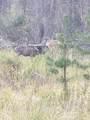 16434 Antelope Drive - Photo 5