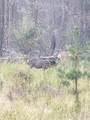 16434 Antelope Drive - Photo 6