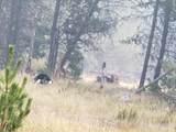 16434 Antelope Drive - Photo 7