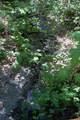 1819 Birdseye Creek Road - Photo 6