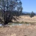 552070 Anderson Ranch Road - Photo 35