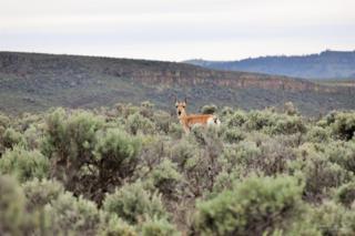 36662 S Diamond Lane, Diamond, OR 97722 (MLS #201611021) :: Birtola Garmyn High Desert Realty