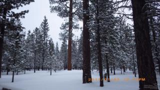 14778 Sugarberry, La Pine, OR 97739 (MLS #201700018) :: Birtola Garmyn High Desert Realty