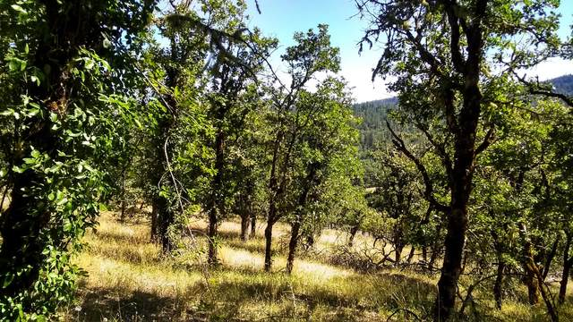 000 Meadows Road, White City, OR 97503 (MLS #220103747) :: FORD REAL ESTATE