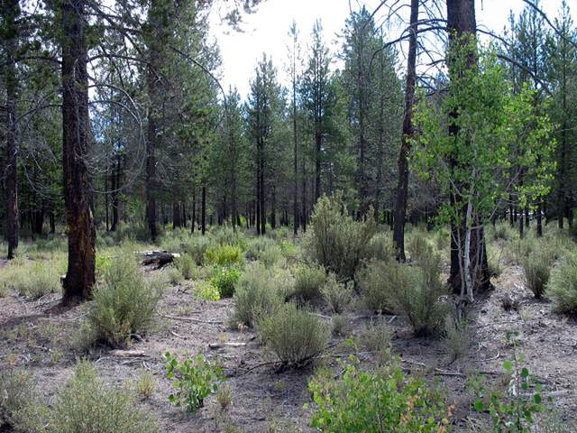 Larkin Creek Road, Chiloquin, OR 97624 (MLS #220107279) :: Bend Homes Now