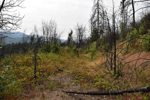 Elk Creek Highway, Trail, OR 97541 (MLS #220109757) :: The Payson Group