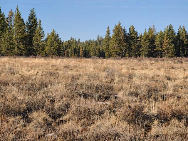 Lot 15 Yellow Pine Road, Beatty, OR 97621 (MLS #220112932) :: Premiere Property Group, LLC