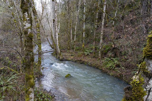0 Poorman Creek Road, Wolf Creek, OR 97497 (MLS #220116878) :: The Ladd Group
