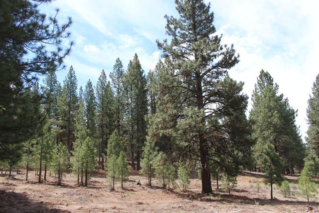 Friendship Drive, Chiloquin, OR 97624 (MLS #220124620) :: Schaake Capital Group