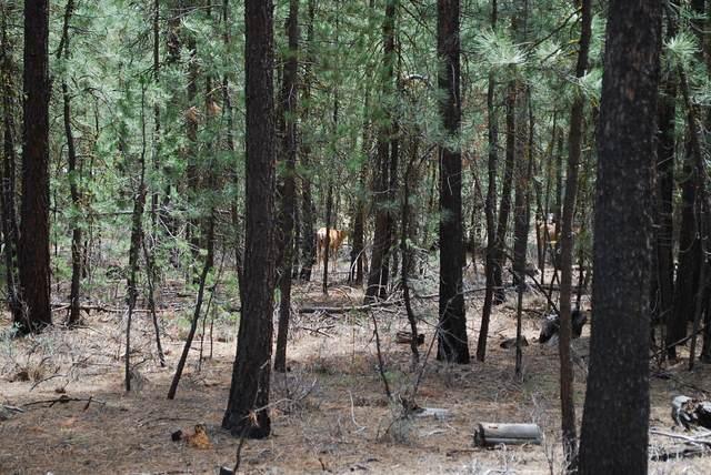 14691 White Pine Way, La Pine, OR 97739 (MLS #220125576) :: The Riley Group