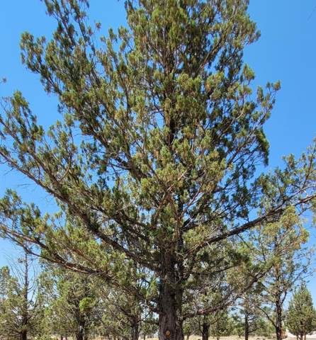 0 SE Doubtful Dirt Road, Prineville, OR 97754 (MLS #220133894) :: Team Birtola | High Desert Realty