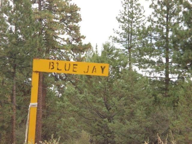 0 Bluejay Drive - Photo 1
