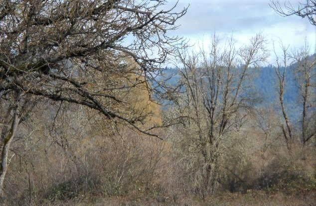 6775 Williams Highway - Photo 1
