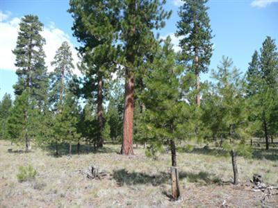 14567 Crossroads Loop, Sisters, OR 97759 (MLS #201602632) :: Birtola Garmyn High Desert Realty